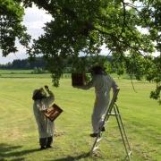 Ochyt včel na deváté jamce